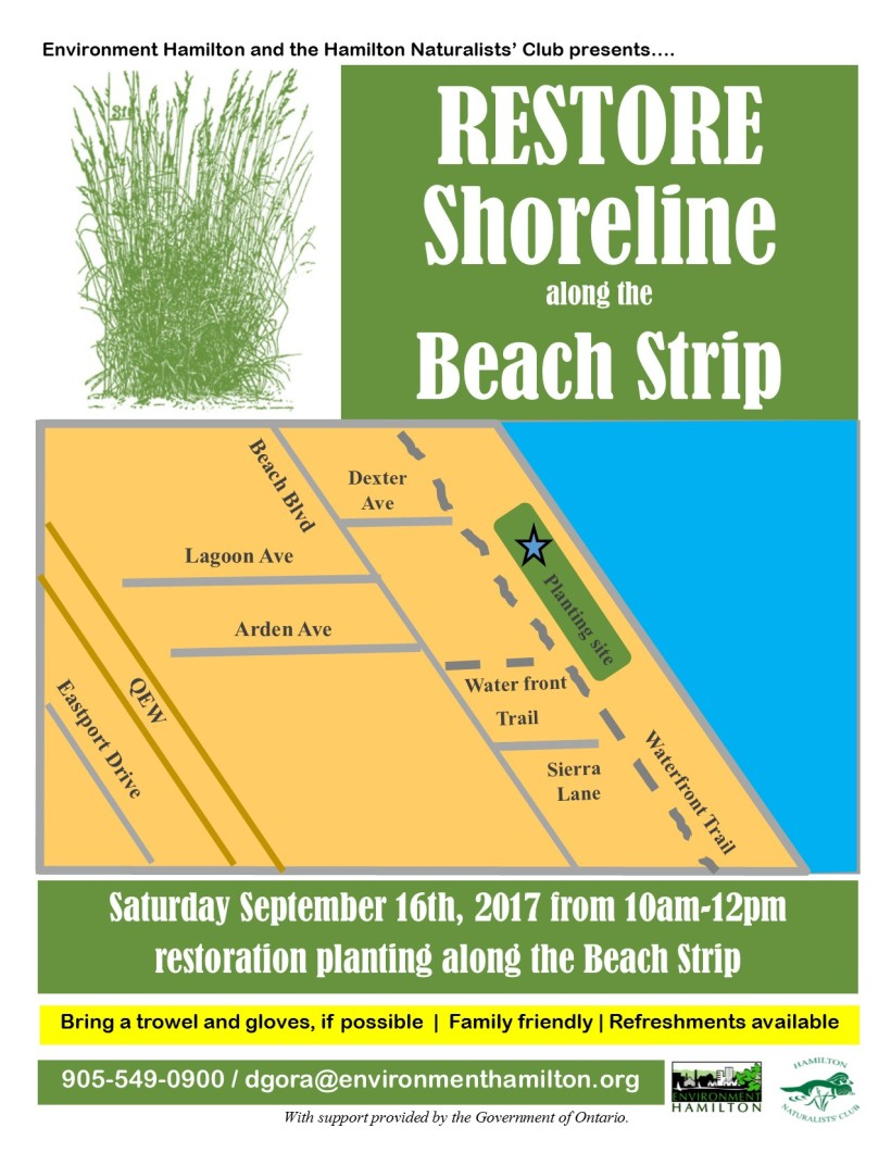 Beach Strip Restoration Planting