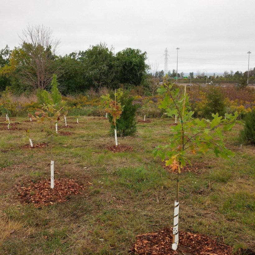 Trees at tree planting.jpg