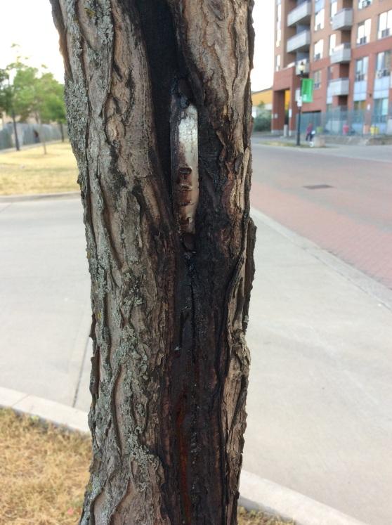 TP photo Tree Monitoring