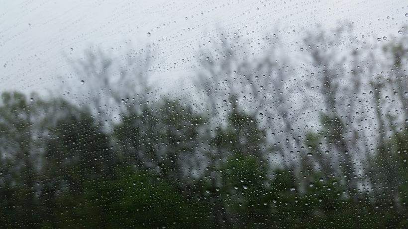 Tree and Rain