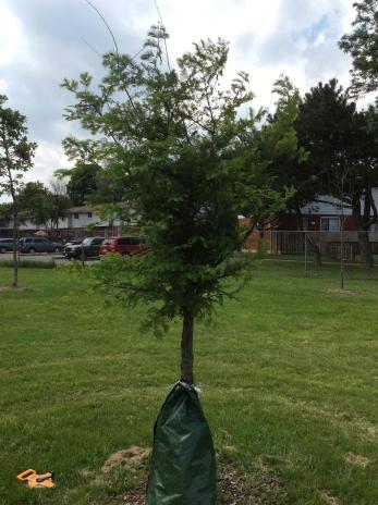 Photo: Trees Please