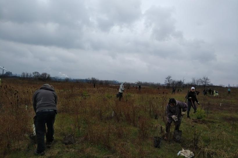 Windermere Basin Tree Planting 2