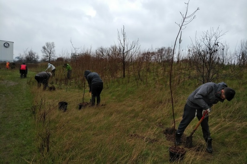 Windermere Basin Tree Planting 3