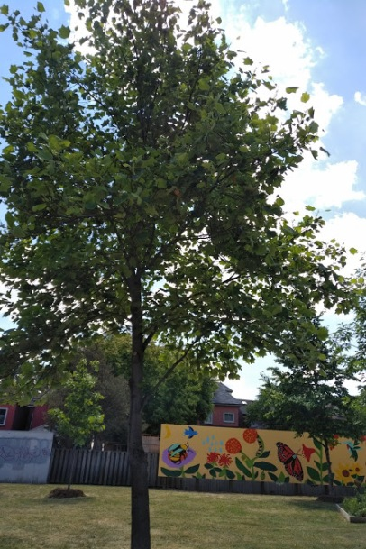 Tulip Tree and mural
